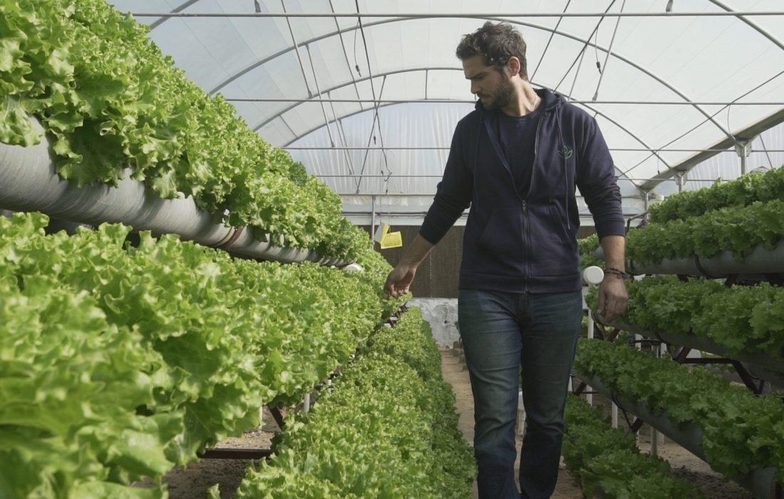 Hydro Farms تحصد تمويلا جديدا لتوسيع أعمالها