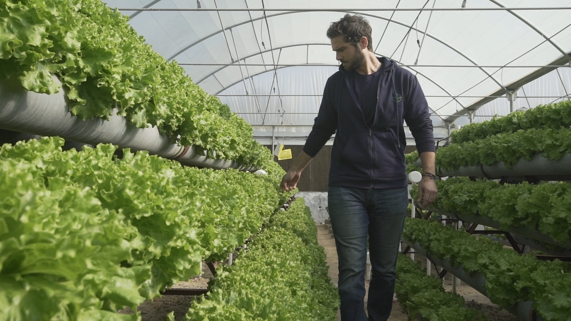 Hydroponic Farming: An Ancient Solution to a New Problem