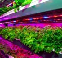 Vertical Farming Startup KRISPR Raises $600,000 in Pre-Seed
