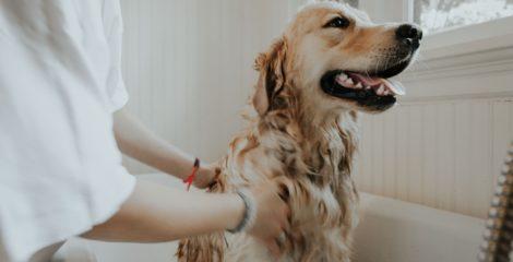 Mubadala Invests $500 Million in Pet Care Firm IVC Evidensia